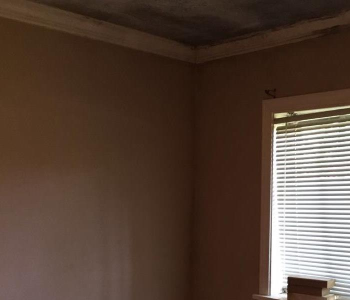 Mold Remediation Mold in the Walls and Ceiling